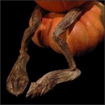 PUMPKIN VINE LEGS wvs-fvl
